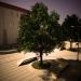 Drvo-klupa sepia.jpg